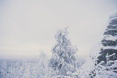 διάσημο Bastei στη Σαξωνία που καλύπτεται με το χιόνι στην ανατολή στοκ εικόνα