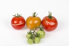 3 διάσπαση, ραγισμένες ντομάτες λόγω της βροχής μετά από την ξηρασία, με το μικρό πράσινο σταφύλι ντοματών Πρόβλημα κηπουρικής στοκ εικόνα με δικαίωμα ελεύθερης χρήσης