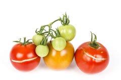 3 διάσπαση, ραγισμένες ντομάτες λόγω της βροχής μετά από την ξηρασία, με το μικρό πράσινο σταφύλι ντοματών Πρόβλημα κηπουρικής στοκ φωτογραφία με δικαίωμα ελεύθερης χρήσης