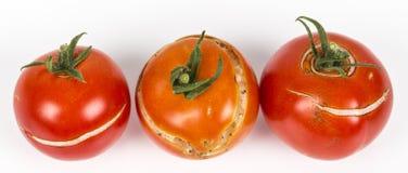 3 διάσπαση, ραγισμένες ντομάτες λόγω της βροχής μετά από την ξηρασία, πρόβλημα κηπουρικής στοκ εικόνα