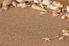 Διάστημα αντιγράφων άμμου αστεριών conch Στοκ Φωτογραφία