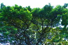Διάστημα πράσινο για αστικό στοκ φωτογραφίες με δικαίωμα ελεύθερης χρήσης