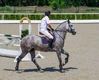 Διάστικτοι γκρίζοι άλογο και αναβάτης στο άσπρο πουκάμισο πέρα από ένα άλμα Στοκ Φωτογραφία
