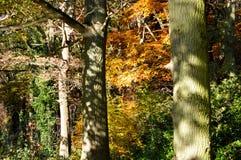Διάστικτο φως του ήλιου στα δέντρα σε ένα δάσος φθινοπώρου Στοκ Εικόνα