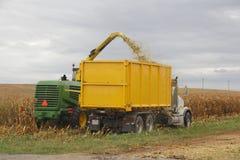 Διάσωση τονισμένου του ξηρασία καλαμποκιού στοκ φωτογραφία με δικαίωμα ελεύθερης χρήσης