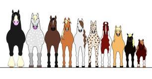 Διάφορα άλογα που παρατάσσουν στη διαταγή ύψους ελεύθερη απεικόνιση δικαιώματος