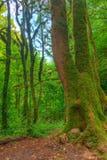 Διάφορα δέντρα πυξαριού κοντά στο μεγάλο κορμό στοκ εικόνες