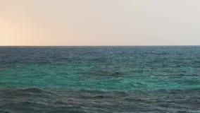 Διάφορα δελφίνια κλωστών που κολυμπούν γρήγορα, που πηδούν από το νερό Σρι Λάνκα απόθεμα βίντεο