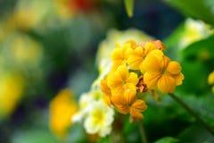 Διάφορα είδη ζωηρόχρωμων λουλουδιών που ανθίζουν κατά τη διάρκεια της άνοιξη στην περιοχή Wintergardens του Ώκλαντ Στοκ Εικόνα