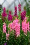 Διάφορα είδη ζωηρόχρωμων λουλουδιών που ανθίζουν κατά τη διάρκεια της άνοιξη στην περιοχή Wintergardens του Ώκλαντ Στοκ Εικόνες