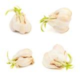 Διάφορα κεφάλια σκόρδου Στοκ Φωτογραφίες