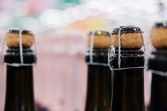 Διάφορα κλειστά μπουκάλια της εκλεκτικής εστίασης οινοπνεύματος φελλού σαμπάνιας στοκ φωτογραφίες με δικαίωμα ελεύθερης χρήσης