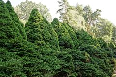 Διάφορα κωνοφόρα διακοσμητικά πράσινα δέντρα στο πάρκο Στοκ Φωτογραφία