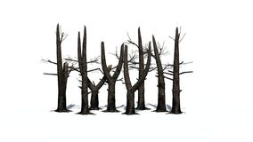 Διάφορα μμένα δέντρα με τη σκιά στο πάτωμα ελεύθερη απεικόνιση δικαιώματος