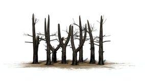 Διάφορα μμένα δέντρα σε μια περιοχή άμμου απεικόνιση αποθεμάτων