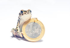 Διάφορα νομίσματα και τρελλός βάτραχος Στοκ φωτογραφίες με δικαίωμα ελεύθερης χρήσης
