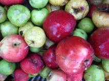 διάφορα σάπια μήλα Στοκ φωτογραφία με δικαίωμα ελεύθερης χρήσης