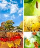 Διάφορα τοπία φθινοπώρου εικόνων Στοκ Εικόνες