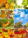 Διάφορα τοπία φθινοπώρου εικόνων Στοκ Εικόνα