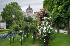 Διάφορα τριαντάφυλλα στο πάρκο με το μουσείο στο υπόβαθρο στοκ εικόνες