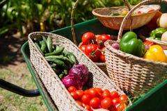 Διάφορα φρέσκα λαχανικά wheelbarrow στοκ εικόνες με δικαίωμα ελεύθερης χρήσης