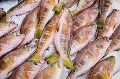 Διάφορα ψάρια στην αγορά, Μαδέρα, Πορτογαλία Στοκ εικόνες με δικαίωμα ελεύθερης χρήσης