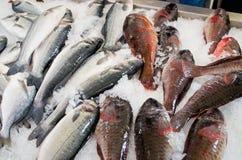 Διάφορα ψάρια στην αγορά, Μαδέρα, Πορτογαλία Στοκ Εικόνα