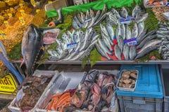 Διάφορα ψάρια στο αντίθετο κατάστημα ψαριών στη Ιστανμπούλ Στοκ εικόνα με δικαίωμα ελεύθερης χρήσης