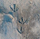 Διάφορα seagull ίχνη στην άμμο στοκ εικόνες
