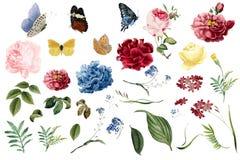 Διάφορες ρομαντικές απεικονίσεις λουλουδιών και φύλλων ελεύθερη απεικόνιση δικαιώματος