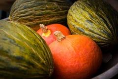 Διάφορες ώριμες κολοκύθες που επιδεικνύονται κατά τη διάρκεια της αγοράς αγροτών Φρέσκες βιο κολοκύθες στο μανάβικο Στοκ εικόνες με δικαίωμα ελεύθερης χρήσης