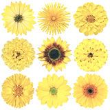 Διάφορη εκλεκτής ποιότητας αναδρομική επιλογή λουλουδιών που απομονώνεται στο λευκό Στοκ Εικόνα