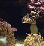 Διάφορη θάλασσα anemones Στοκ εικόνα με δικαίωμα ελεύθερης χρήσης