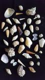 Διάφορη συλλογή κοχυλιών θάλασσας από την παραλία Στοκ εικόνα με δικαίωμα ελεύθερης χρήσης
