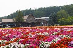 Διάφοροι ζωηρόχρωμοι τομείς λουλουδιών στο αγρόκτημα Tomita, Furano, Hokkaido Στοκ Εικόνες