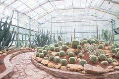 Διάφοροι τύποι κάκτων και succulent στο σπίτι γυαλιού στοκ εικόνες
