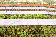 Διάφοροι τύποι φρέσκων λαχανικών που φυτεύονται στην πλοκή λαχανικών Στοκ φωτογραφία με δικαίωμα ελεύθερης χρήσης