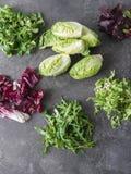Διάφοροι τύποι φύλλων σαλάτας σε ένα γκρίζο υπόβαθρο στοκ φωτογραφία με δικαίωμα ελεύθερης χρήσης