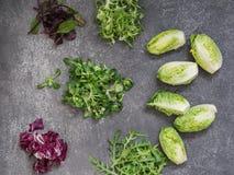 Διάφοροι τύποι φύλλων σαλάτας σε ένα γκρίζο υπόβαθρο στοκ φωτογραφίες με δικαίωμα ελεύθερης χρήσης