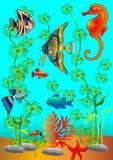 διάφορος βυθός ψαριών Στοκ φωτογραφίες με δικαίωμα ελεύθερης χρήσης
