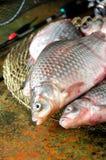 Διάφορο επιπλέον σώμα κλουβιών ράβδων αλιείας χρυσόψαρων στοκ φωτογραφία με δικαίωμα ελεύθερης χρήσης