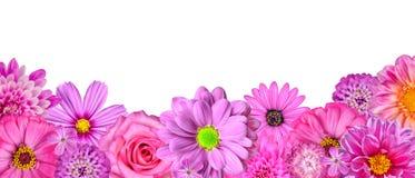 διάφορο λευκό επιλογής σειρών λουλουδιών ρόδινο Στοκ Εικόνα