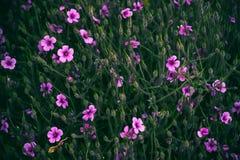 Διάφορο ρόδινο υπόβαθρο τομέων λουλουδιών Στοκ εικόνα με δικαίωμα ελεύθερης χρήσης