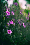 Διάφορο ρόδινο υπόβαθρο τομέων λουλουδιών Στοκ Εικόνες
