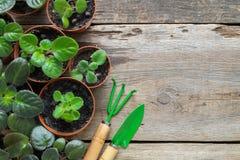 Διάφορο flowerpot των εγχώριων εγκαταστάσεων Φύτευση των σε δοχείο λουλουδιών και των εργαλείων κήπων στοκ εικόνα με δικαίωμα ελεύθερης χρήσης