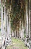 Διάδρομος δέντρων στοκ εικόνες