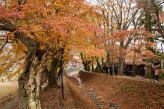 Διάδρομος Momiji, Kawaguchiko, Ιαπωνία Στοκ εικόνες με δικαίωμα ελεύθερης χρήσης