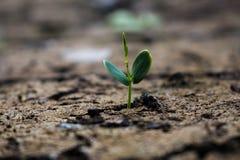 Διαβίωση με την ξηρασία δέντρων στοκ φωτογραφία με δικαίωμα ελεύθερης χρήσης
