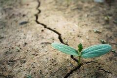 Διαβίωση με την ξηρασία δέντρων στοκ εικόνες