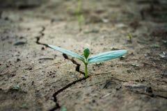 Διαβίωση με την ξηρασία δέντρων στοκ φωτογραφία